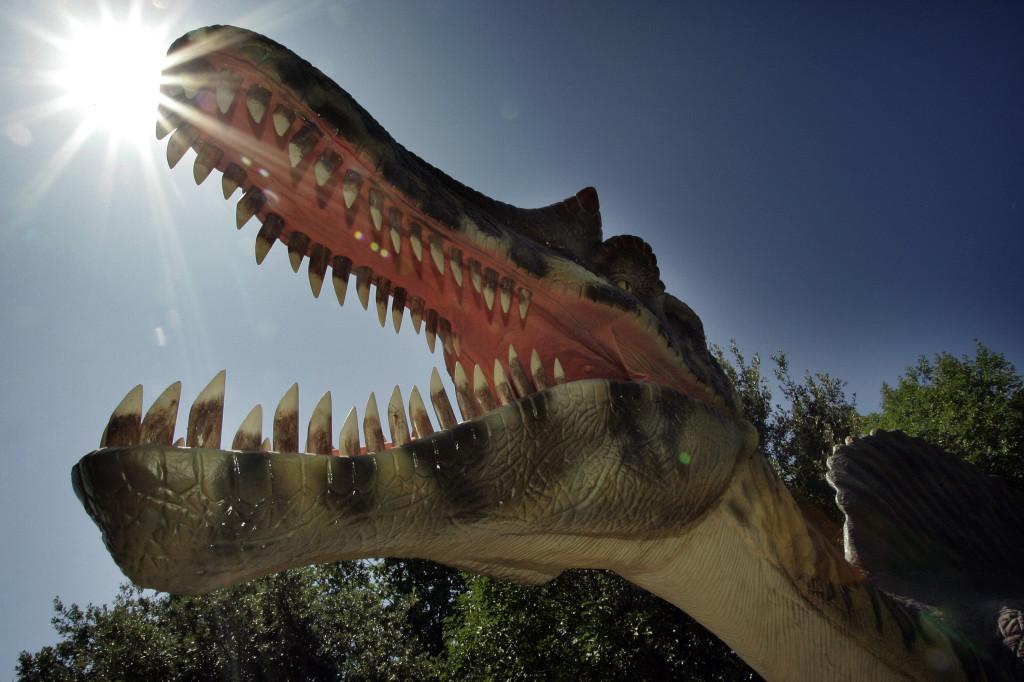 Testa di spinosauro del DInopark di Omis