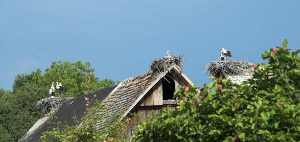 Il Villaggio delle Cicogne Cigoc