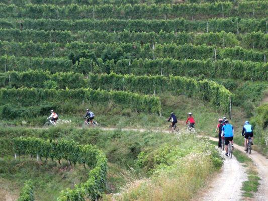 strade del vino ed escursioni in Istria