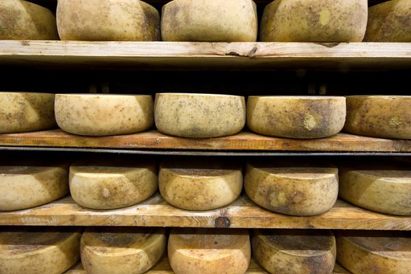 formaggio di pecora dell'isola Pag Paski Sir