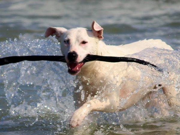 spiagge per cani in Croazia divertimento a quattro zampe