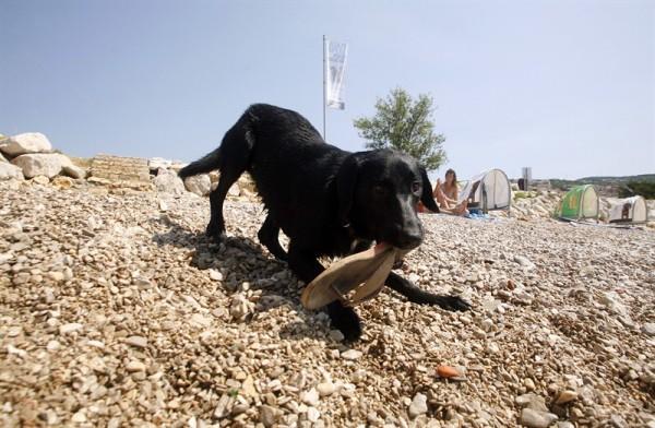 spiagge per cani a Zara