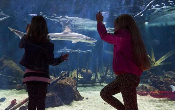 Spalato acquario con oltre 130 esemplari