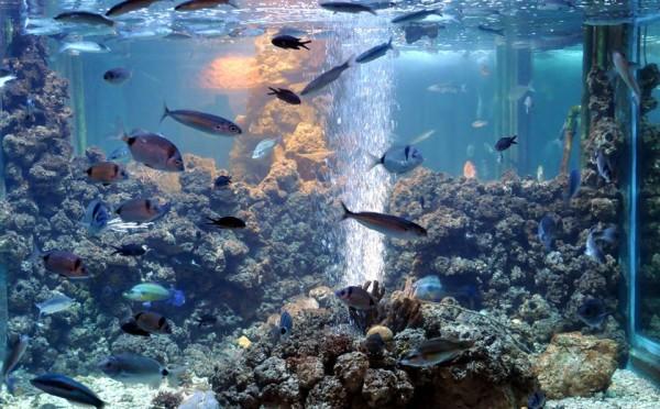acquario di Pola nella Fortezza Verduela