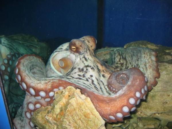 acquario di Porec Parenzo