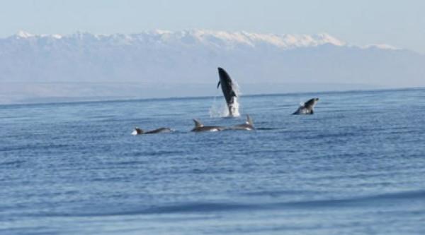 delfini in Croazia