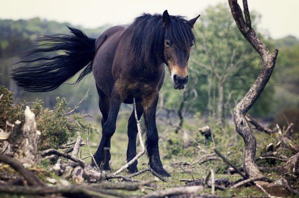 cavalli selvaggi sulle montagne del Velebit in Croazia