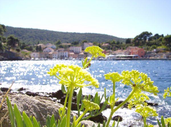 Lussinpiccolo sull'isola Lussino