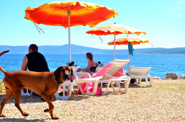 spiaggia per cani e beach bar Monty's