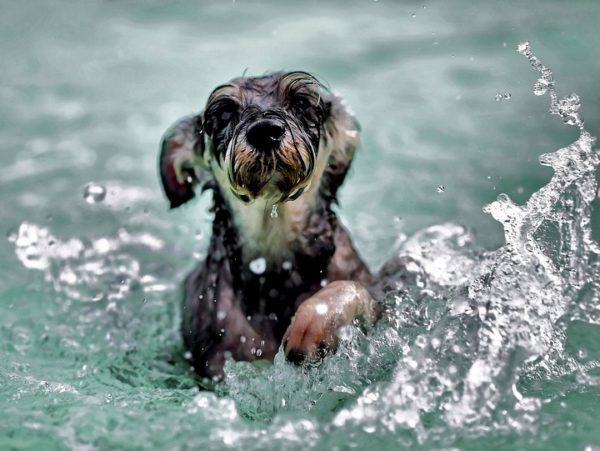 cani in Croazia